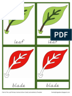 Parts of the Leaf Primary Nomenclature Cards (Red Isolation) d'Nealian