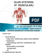 Anatomi Otot 2&3