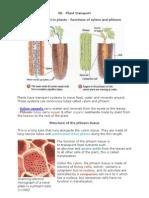 06 Plant Transport Biology Notes IGCSE 2014