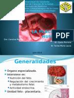 5. Placenta Humana