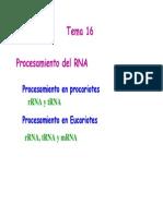 47821793-Tema-16-Procesamiento-post-transcripcional (1).pdf
