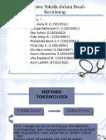 toksikologi kecubung