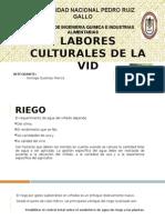 Labores Culturales de La Uva