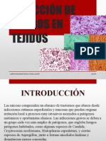 Detección de Hongos en Tejidos