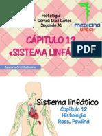Sistemalinfatico Histologia 150509190616 Lva1 App6892
