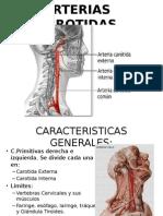 Arterias Carótidas y nervios craneales
