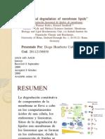 Lysosomal Degradation of Membrane Lipids