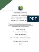 IDENTIFICACIÓN DE CRUSTÁCEOS Y MOLUSCOS (MACROINVERTEBRADOS) ASOCIADOS AL ECOSISTEMA   MANGLAR DE LA COMUNA PALMAR