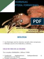 Clase Taxonomía Animal - Hormigas
