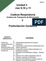 Hora 9,10 y 11 u3-Cadena Respiratoria-fosforilacion Oxidativa- 3 Octubre 2014