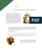 Atividade Estruturada - Matemática Financeira