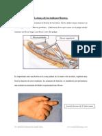 Lesiones de Los Tendones Flexores (1)