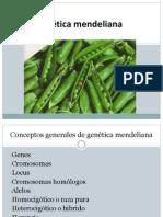 Genética mendeliana 2
