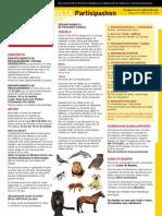 Partisipashon Pro Bista WEEK 23 2015.pdf