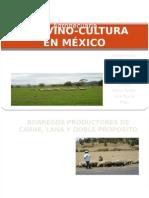 La Ovino-cultura en México