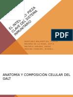 El intestino exposicion de seminario.pptx
