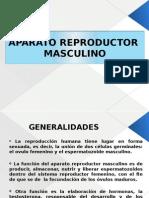 APARATO REPRODUCTOR DIAPOS
