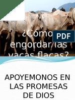 Cómo Engordar Las Vacas Flacas