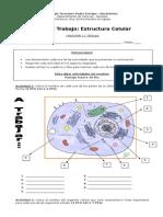 Guia Estructura de La Celula - Recuperacion