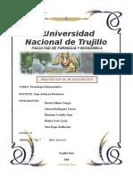 Estudio de Una Planta Piloto (Informe)