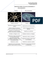 Cuadro comparativo celulas eucarionte y procarionte