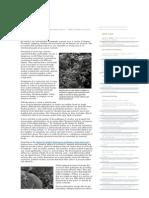 Understanding Biofilms