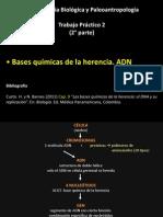 AntBiol_TP2_2°parte ADN
