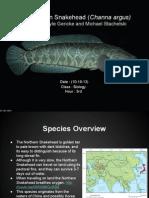 northern snakehead presentation (1)