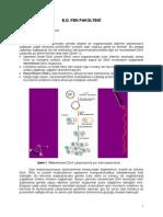 Rek DNA Ders Notlari 2015 Bahar.pdf