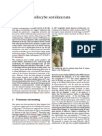 Psilocybe semilanceata