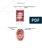 fau dental terms for quiz