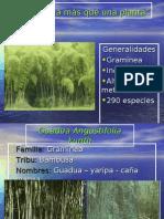 4107223 Conferencia Acero Vegetal