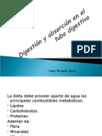 Digestión y Absorción en El Tubo Digestivo