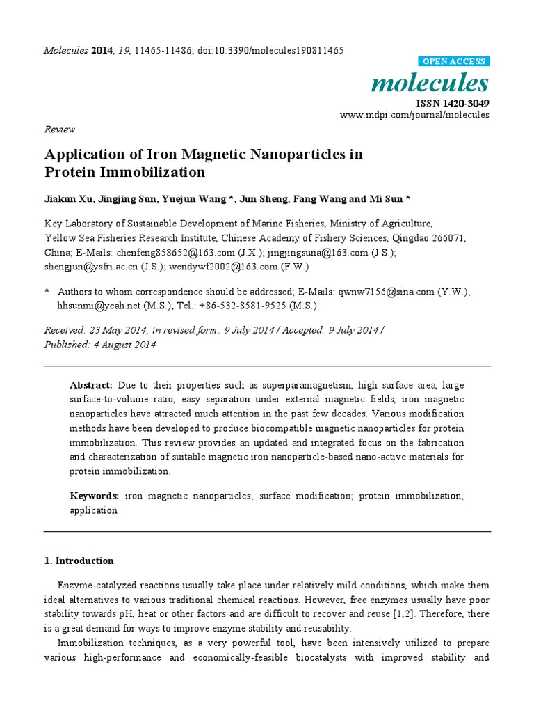 Application of Iron Magnetic Nanoparticles in Protein Immobilization