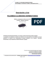 Descripcion_y_Cria_PALEMBUS_ULOMOIDES_DERMESTOIDES_Gorgojo_de_la_harina.pdf