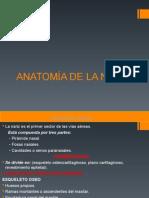Anatomia Nariz