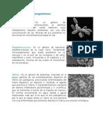Géneros de Microorganismos