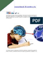 Sistema neuroescritural.docx