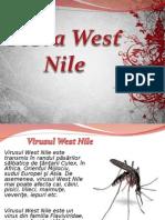 Febra West Nile