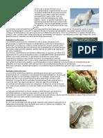 Animales Homeotermos