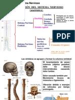 BIO032 Sistema Nervioso VESP 2014.pdf