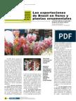 Exportacion de Flores Al Brasil