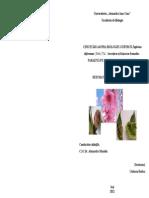 Cercetări Asupra Biologiei Ciupercii Taphrina deformans ( Berk.) Tul. – Încreţirea Şi Băşicarea Frunzelor - Parazită Pe Diferite Soiuri de Piersic-rezumatul Tezei de Doctorat