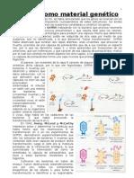 Genética replicación, transcripción y traducción