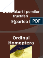 9 Daunatorii Pomilor Fructiferi 1
