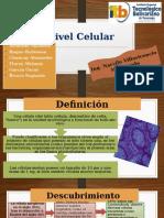 Nivel Celular (Exposicion)