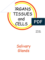 Organs Tissues and Cells