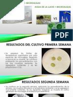 Cultivo de Microalgas en Agua Residual