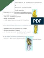 PROYECCIÓN DORSO PLANTAR.docx