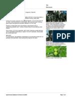 Brosimum_alicastrum Agroforestry Database 4.0 (Orwa Et Al.2009)